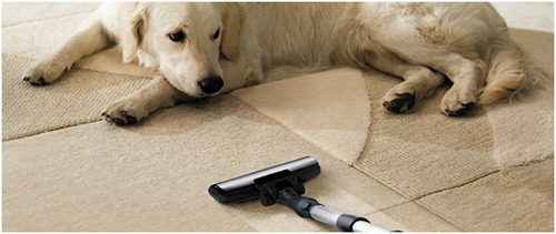 Pets Can Spoil Your Most Expensive And Valuable Carpets