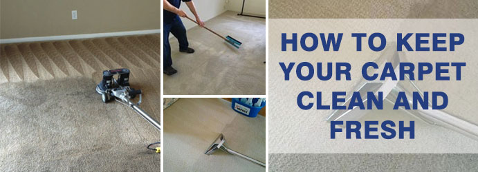 How to Keep Your Carpet Clean and Fresh