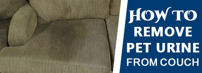 Remove Pet Urine From Couch