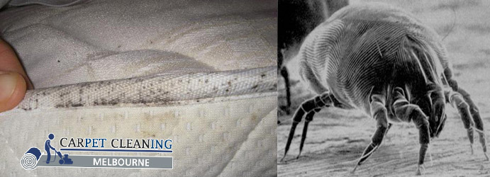 Mattress Dust Mites Removal