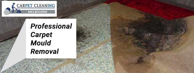 Professional Carpet Mould Removal