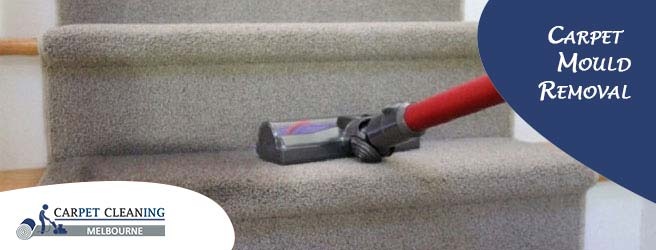 Dangers of Mould Infestation on a Carpet