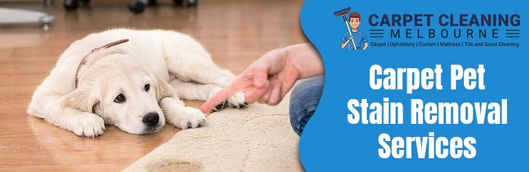 Carpet Stain Removal Invermay