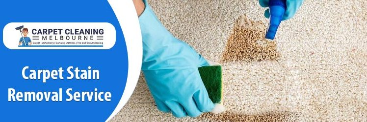 Best Tips To Shampoo A Carpet